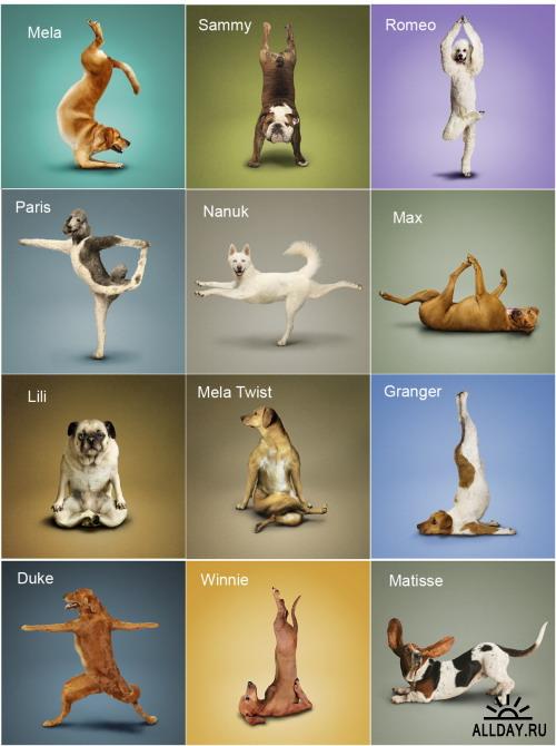 Поздравление йога